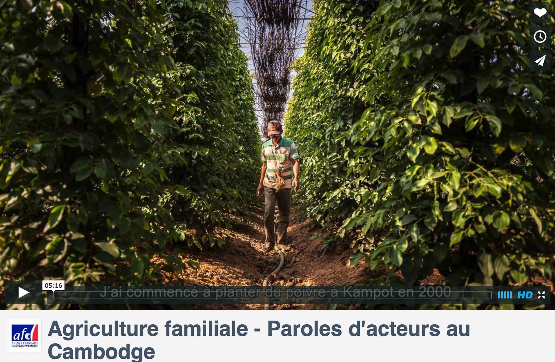 L'agriculture familiale au Cambodge – Portraits d'agriculteurs pour l'AFD